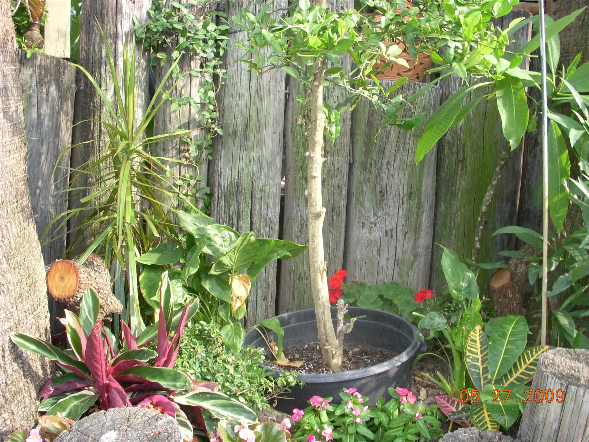 Colorful garden with tall plants next to a variety of pink and red flowers