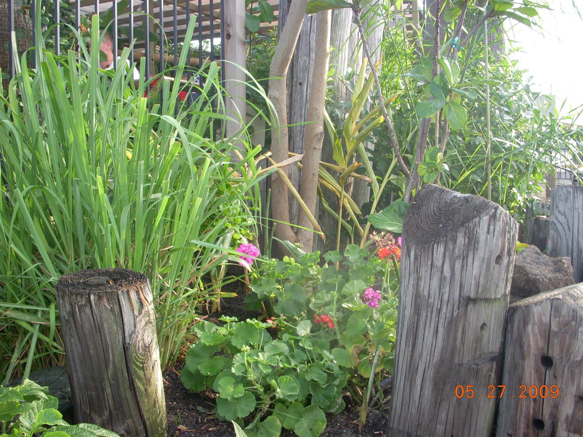 Garden filled with flowers and tree stumps