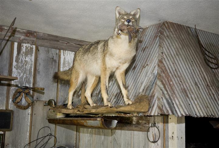Wolf statue hanging overhead
