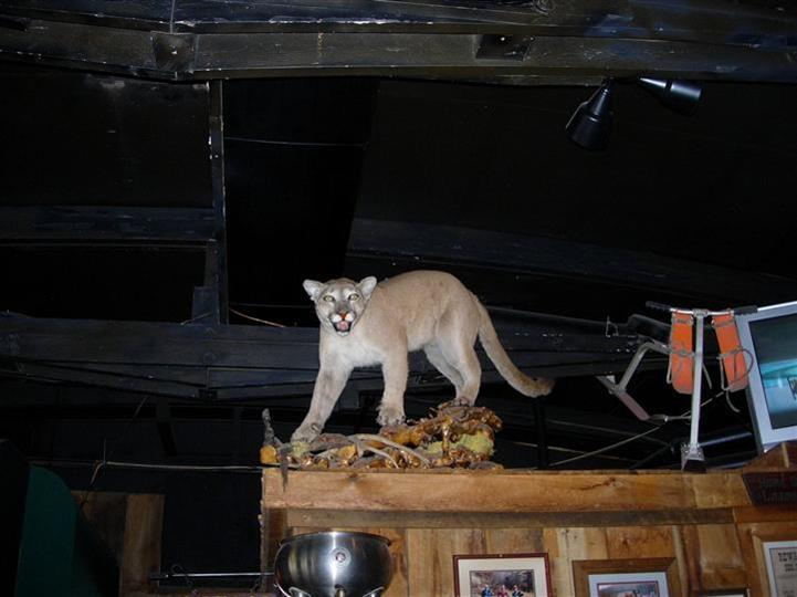 Interior decoration of a embalmed puma