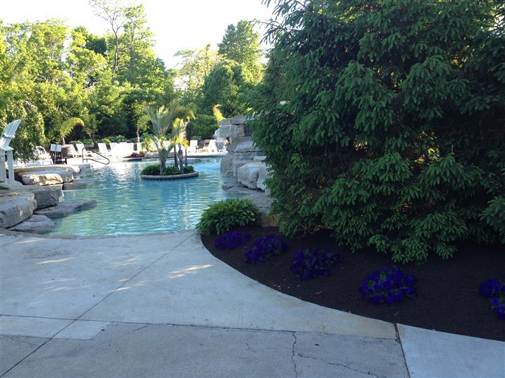 the poolside view of the plants and pool