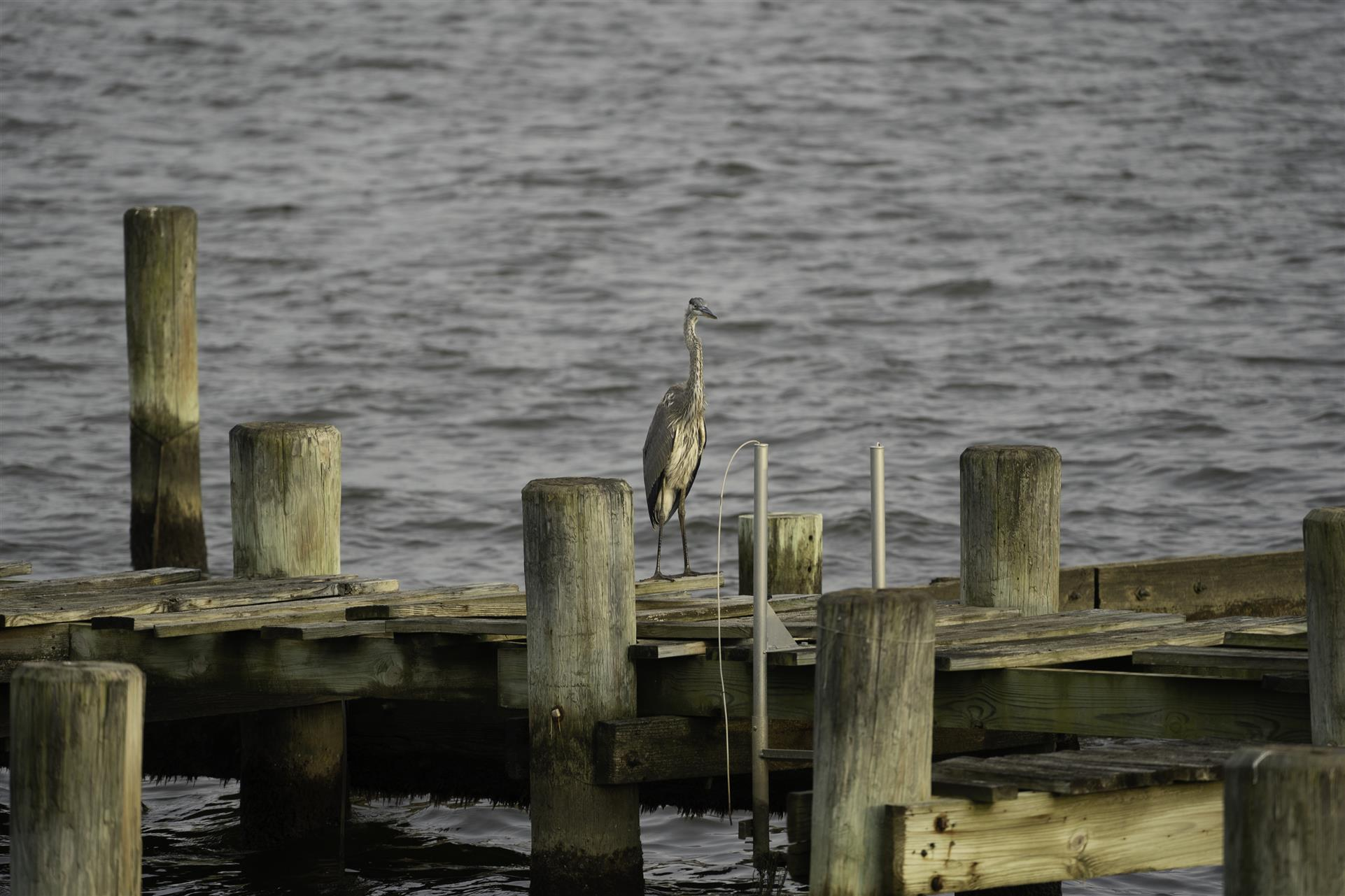 a dock over the water with a bird on it