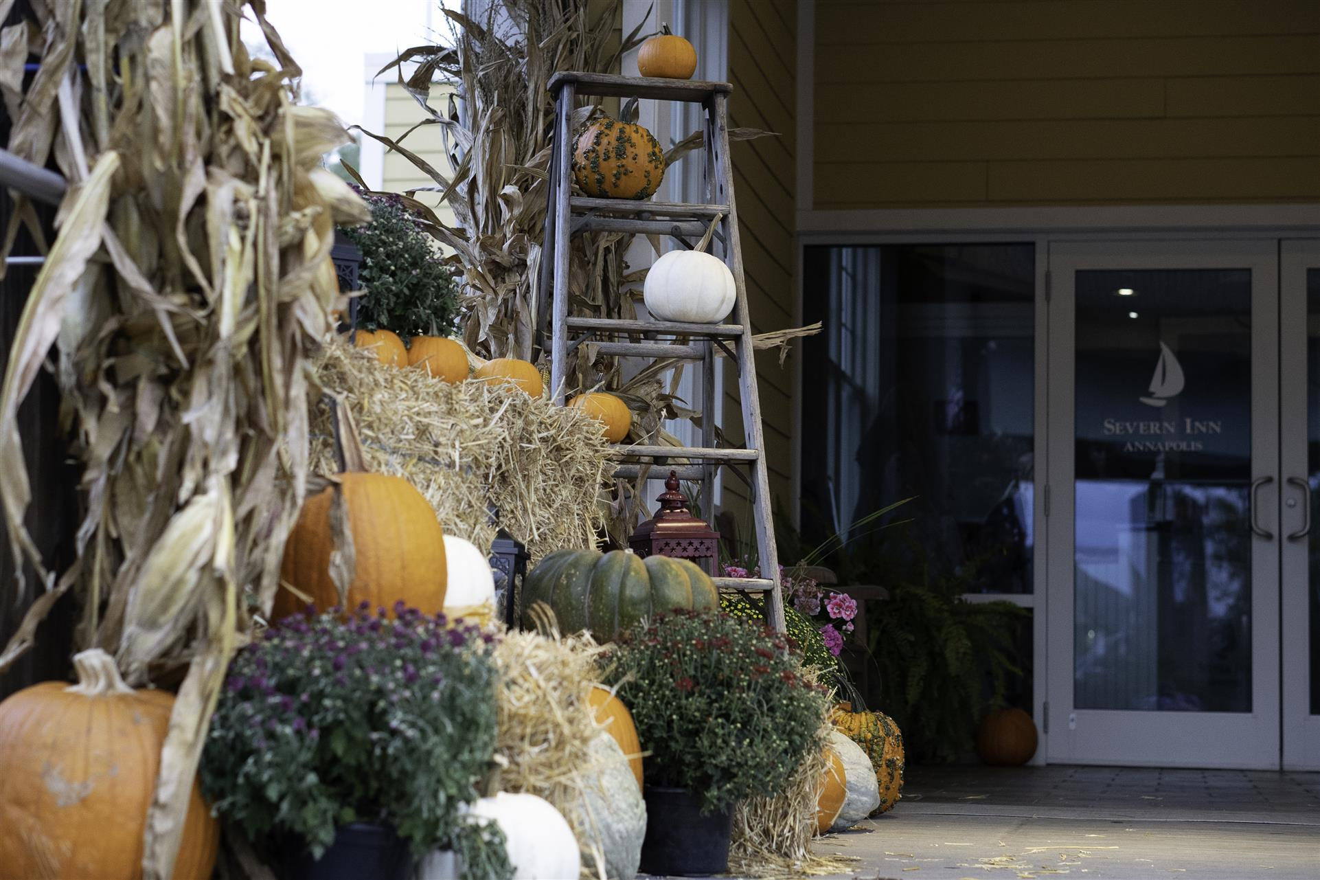 a stack of hay with pumpkins and a ladder