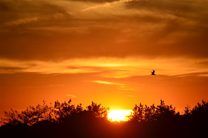Photo of the sunset and birds flying