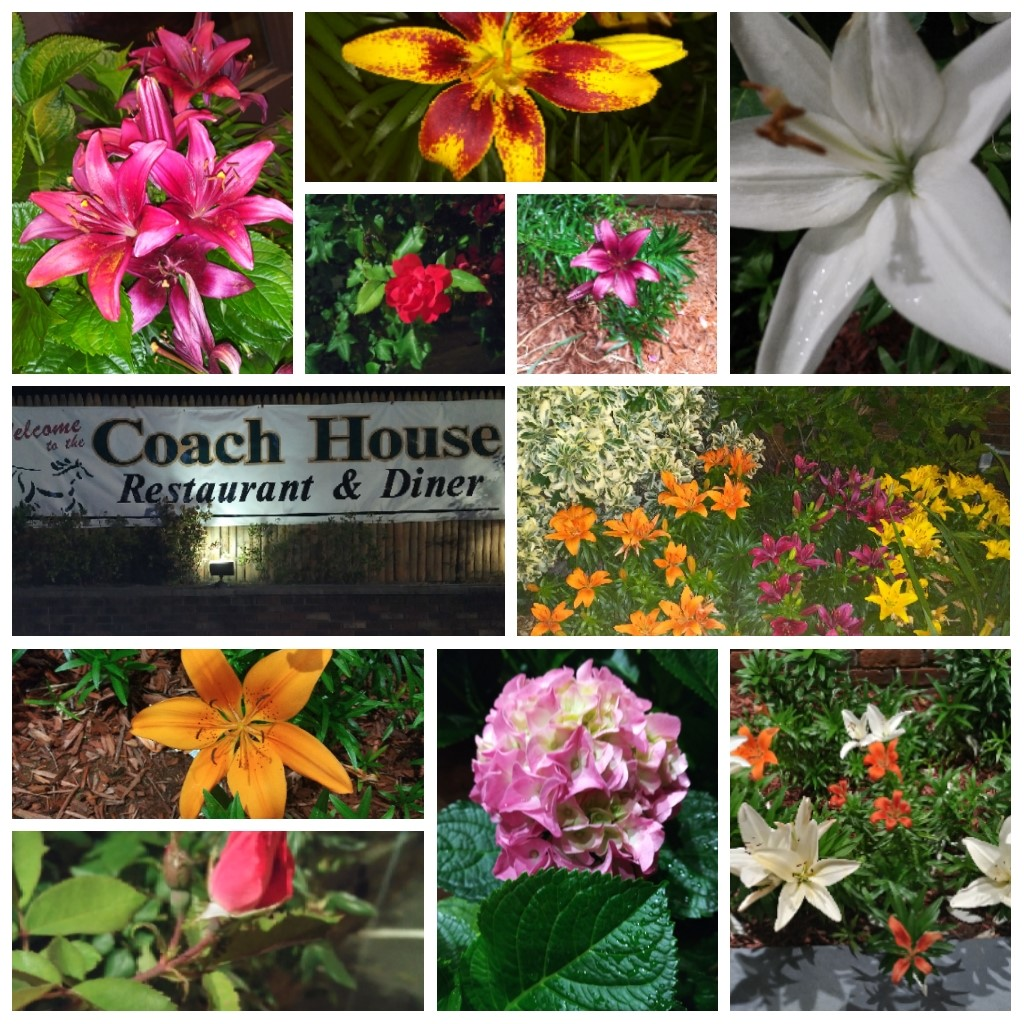 a variety of different flowers planted outdoors