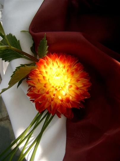 a flower with a light  through it