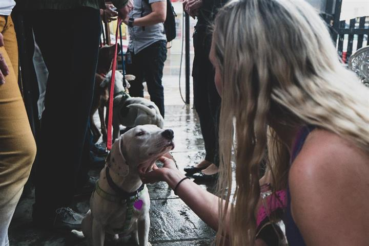 dog being pet by a young woman