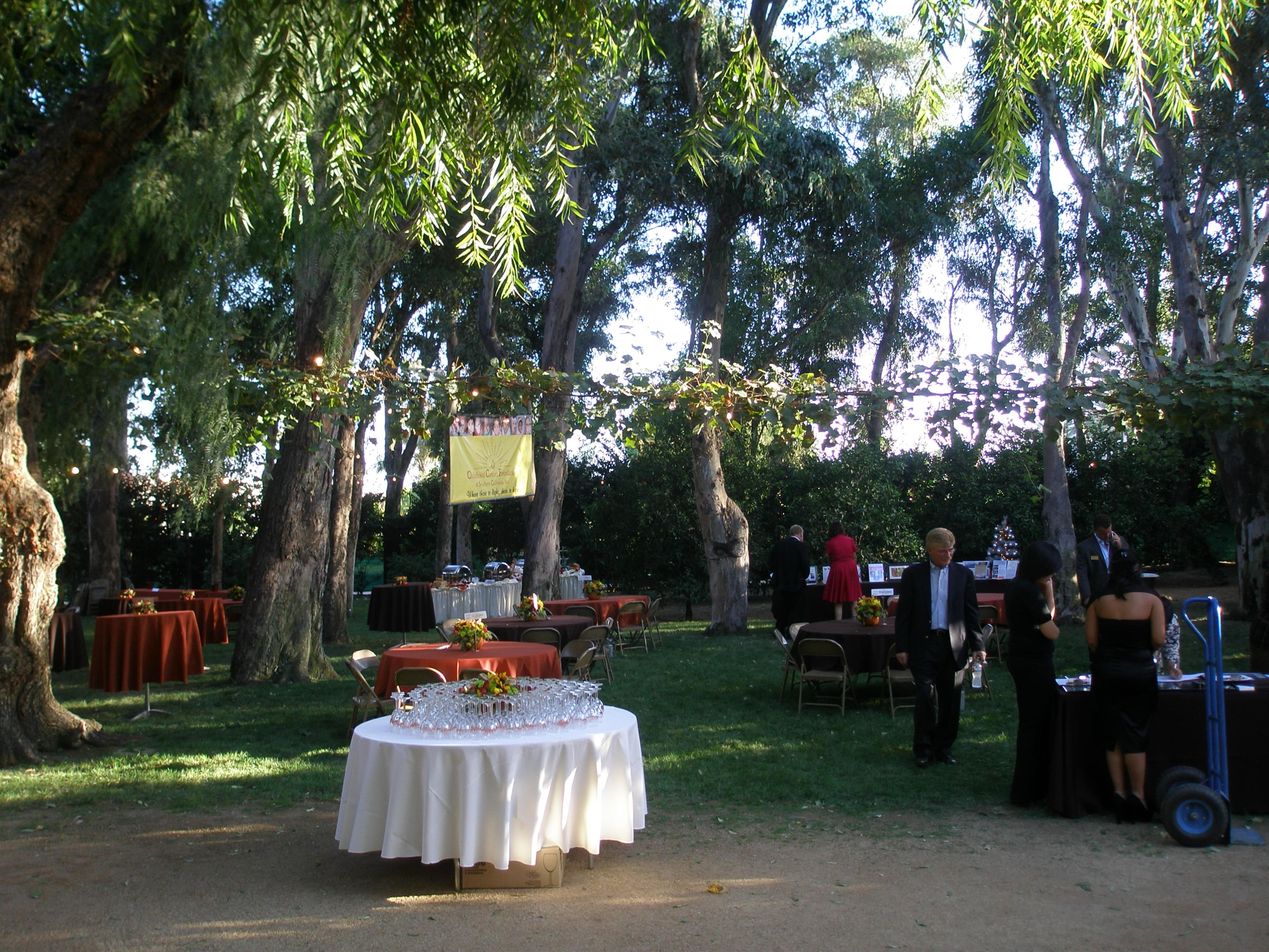 Outdoor banquet event under tall trees