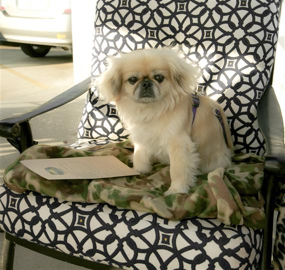 Small dog sitting on a seat