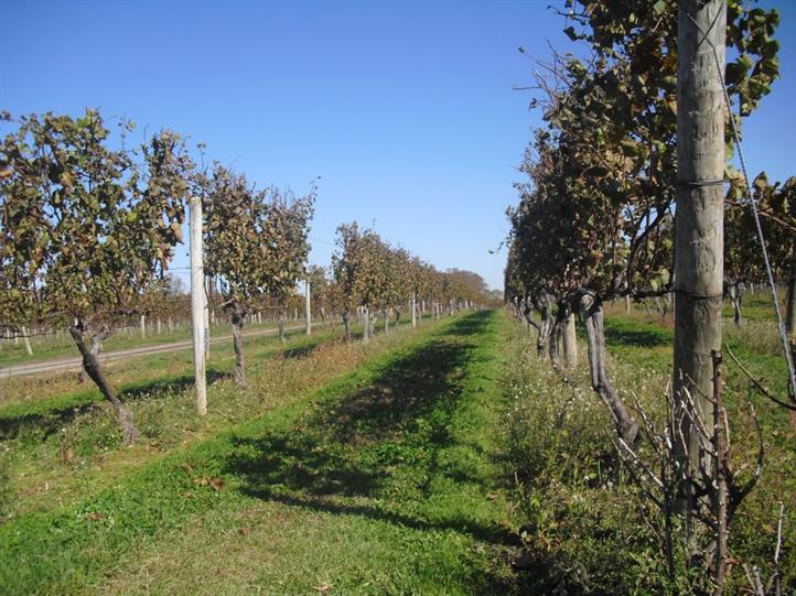 wine vineyard