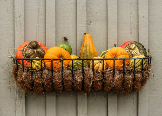 Assorted pumpkins in a basket