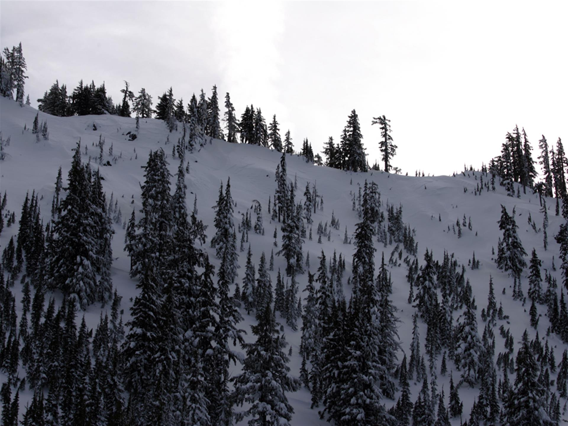 snow-covered trees on side of a mountain