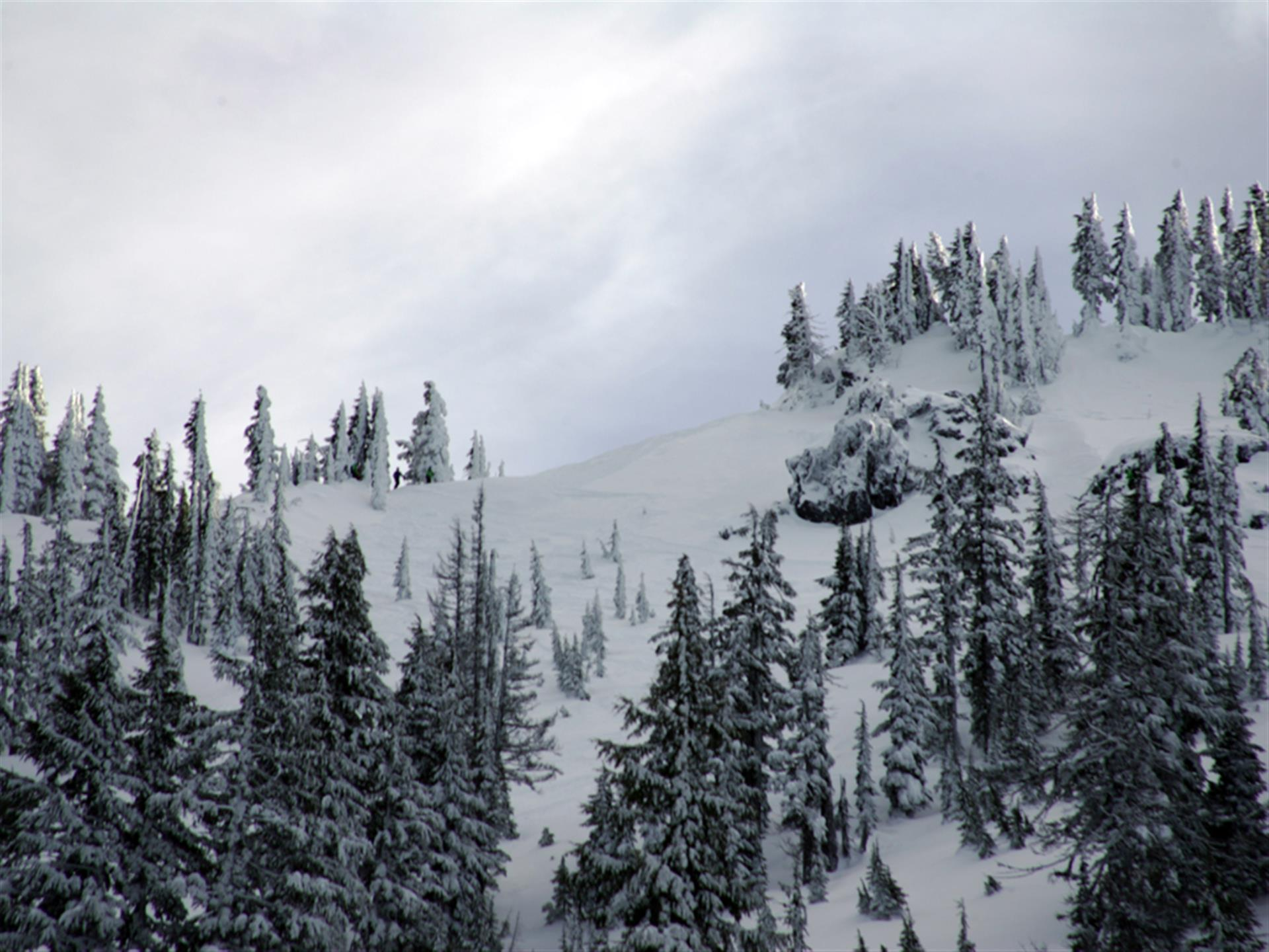 mountain with snow and snow-covered trees