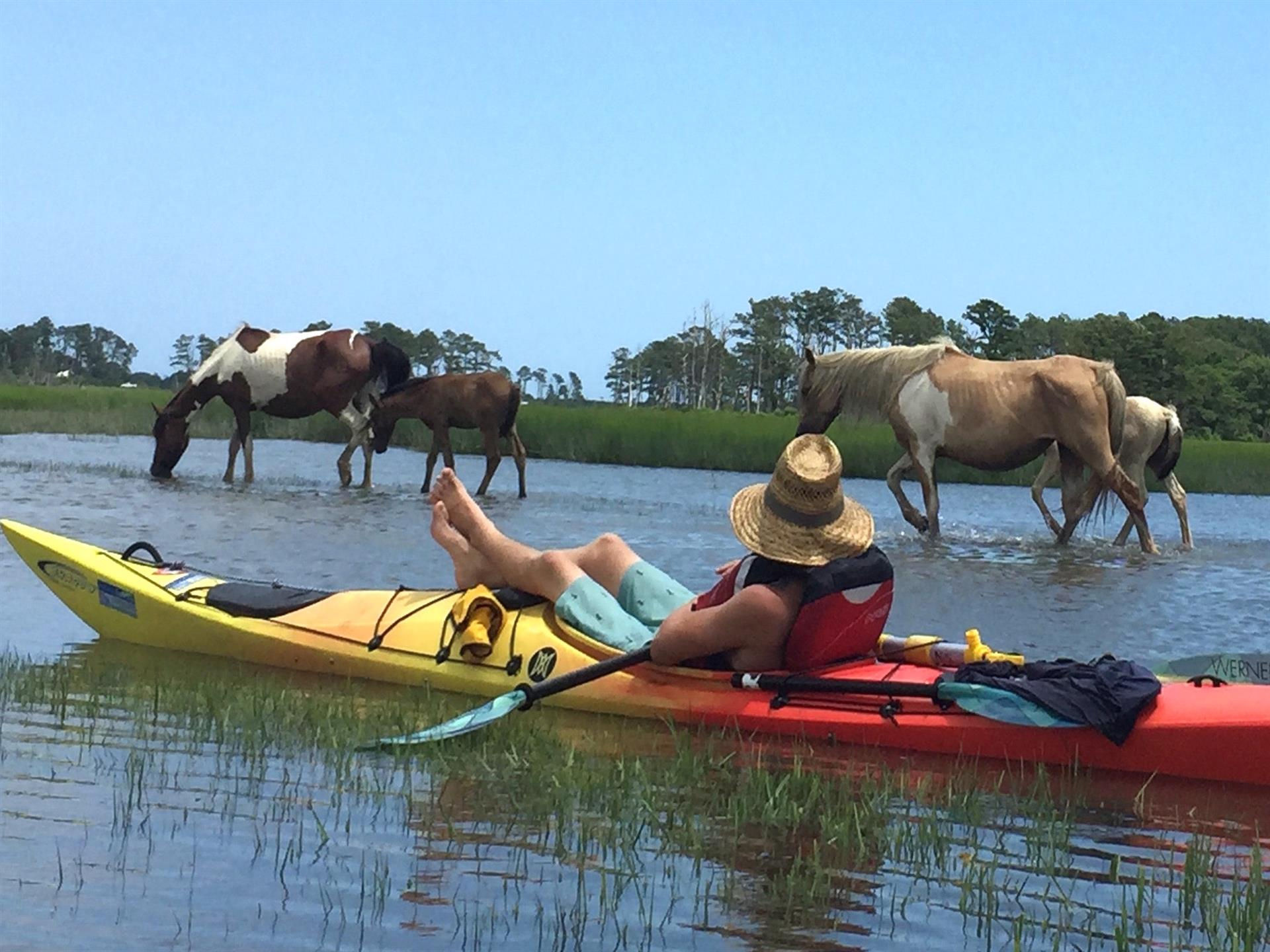 Paddle with the ponies in Chincoteague