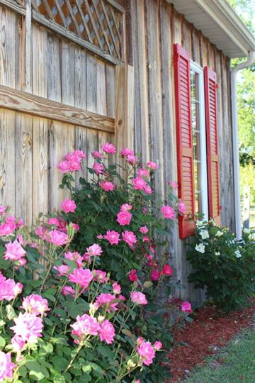 Outdoor photo of the winery with pink flowers