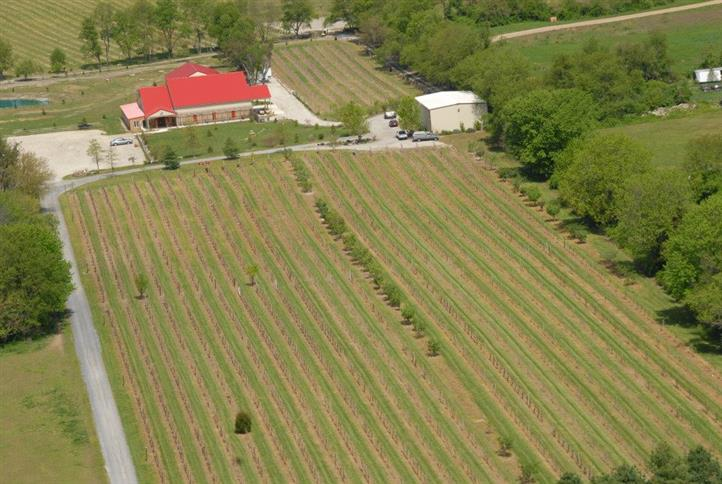 Aerial photograph of the vineyard