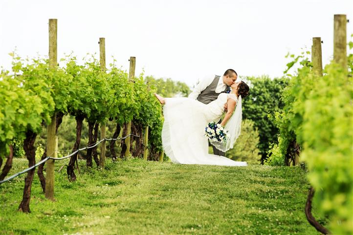 A wedding photo of a couple kissing in the vineyard
