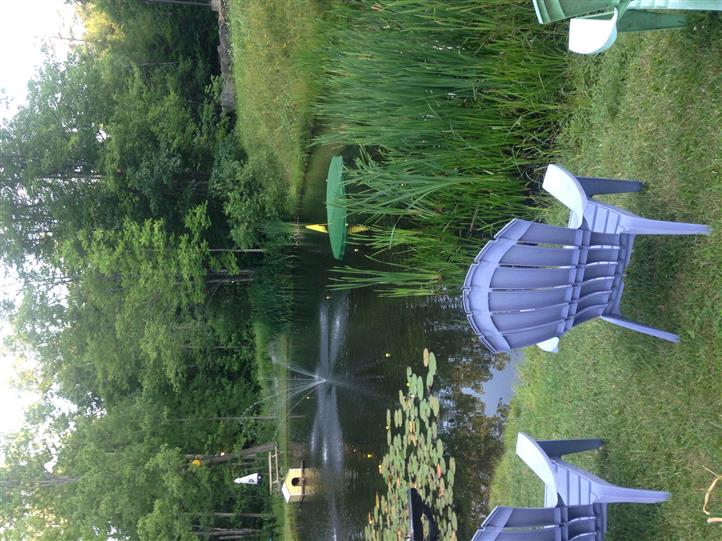 Shot of the pond