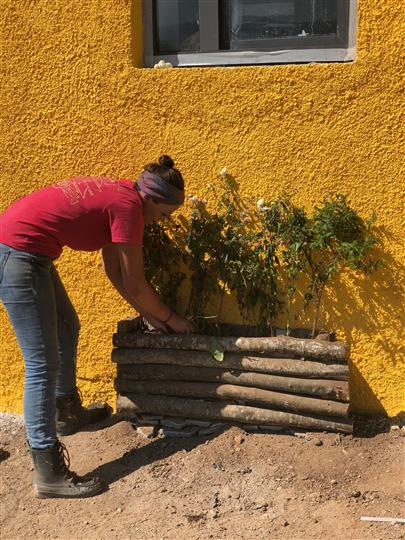Woman planting trees against a yellow wall